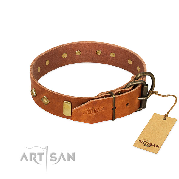 Fancy walking full grain genuine leather dog collar with designer embellishments