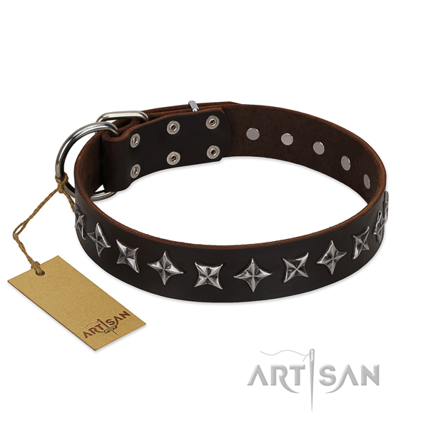 Everyday use dog collar of fine quality full grain leather with adornments