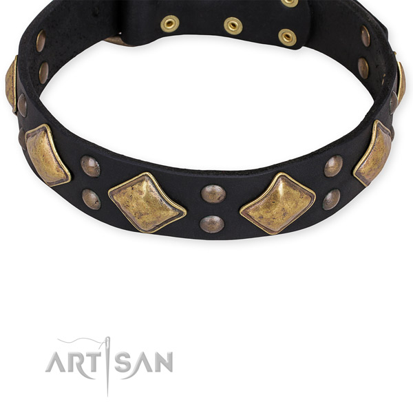 Leather dog collar with trendy durable adornments