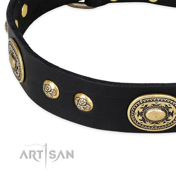 Studded leather collar for your beautiful canine