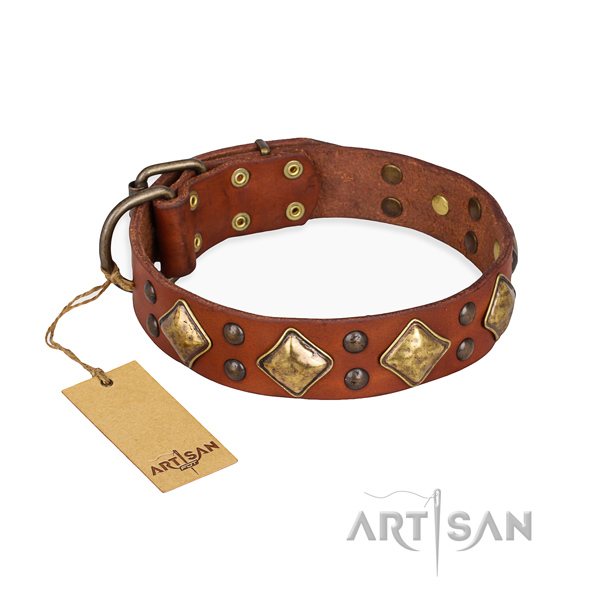 Daily use easy wearing dog collar with strong buckle