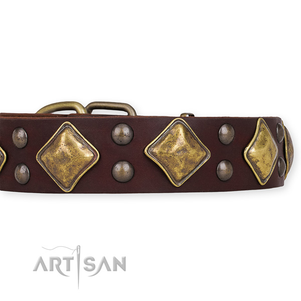 Natural leather dog collar with impressive corrosion proof studs