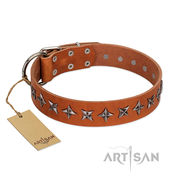 Fancy walking dog collar of finest quality full grain natural leather with decorations