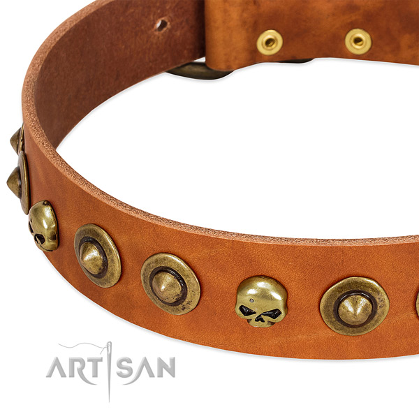 Exquisite studs on full grain leather collar for your four-legged friend