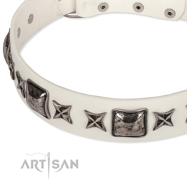 Fancy walking studded dog collar of finest quality full grain leather