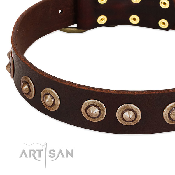 Rust-proof studs on leather dog collar for your pet