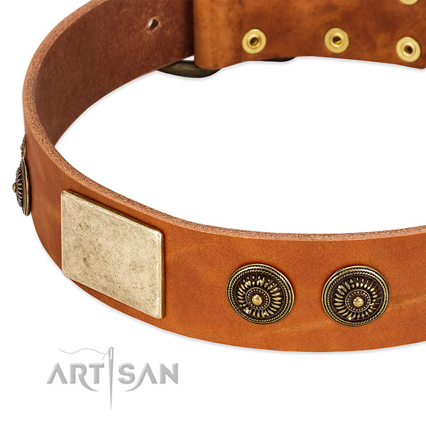 Extraordinary dog collar made for your stylish pet