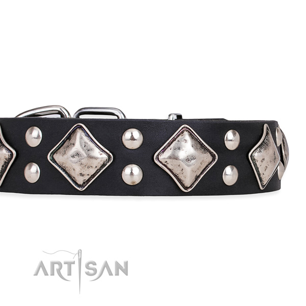 Natural leather dog collar with amazing corrosion proof embellishments