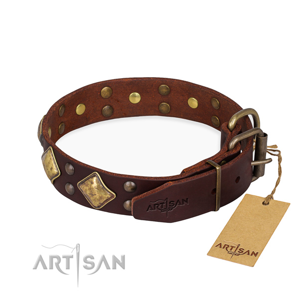 Full grain leather dog collar with extraordinary corrosion proof studs