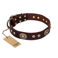 """Breath of Elegance"" FDT Artisan Decorated with Plates Brown Leather English Bull Terrier Collar"