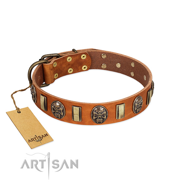 Exceptional genuine leather dog collar for stylish walking
