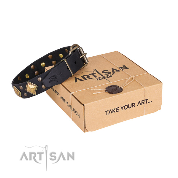 Daily walking dog collar with Stunning rust resistant adornments