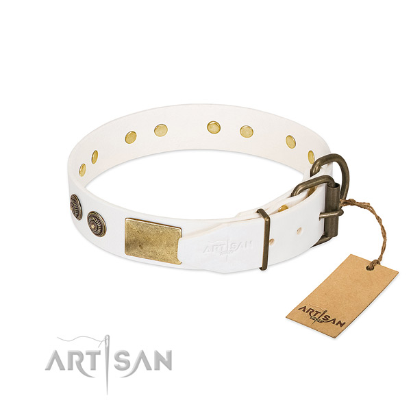 Corrosion proof traditional buckle on full grain leather collar for stylish walking your four-legged friend