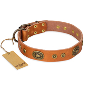 """Dandy Pet"" FDT Artisan Handcrafted Tan Leather English Bull Terrier Collar"