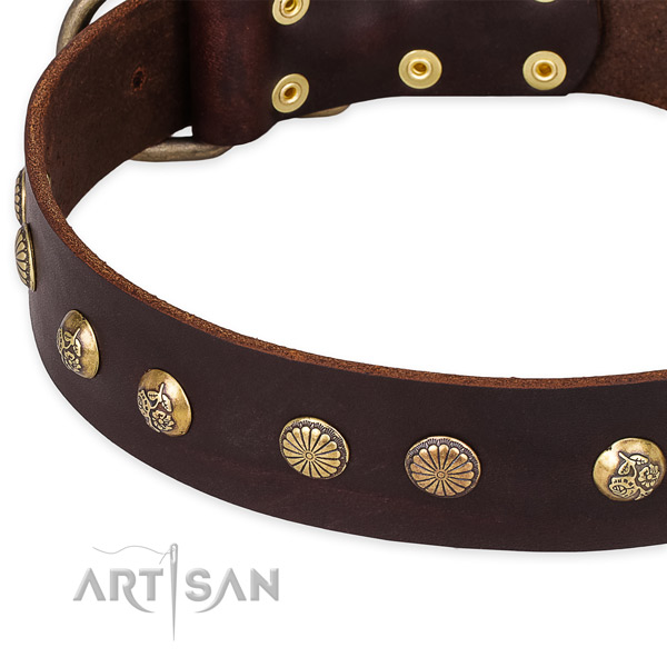 Genuine leather collar with reliable buckle for your impressive four-legged friend