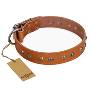 """Golden""n""Silver Luxury"" FDT Artisan Leather English Bull Terrier Collar with Engraved Studs"
