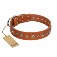 """Gorgeous Roundie"" FDT Artisan Tan Leather English Bull Terrier Collar with Chrome-plated Circles"