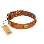"""Celtic Tunes"" FDT Artisan Tan Leather English Bull Terrier Collar Adorned with Stars and Squares"