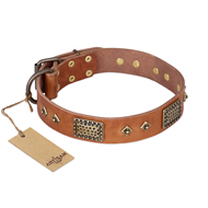 """Catchy Look"" FDT Artisan Decorated Tan Leather English Bull Terrier Collar"