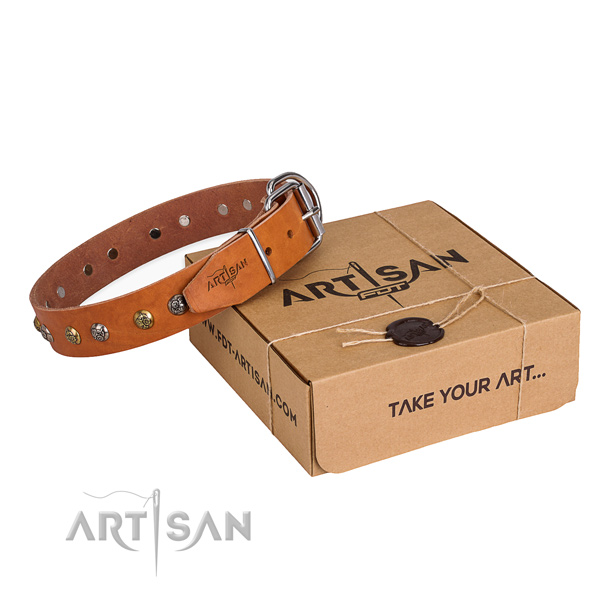 Daily walking dog collar with Inimitable rust resistant embellishments