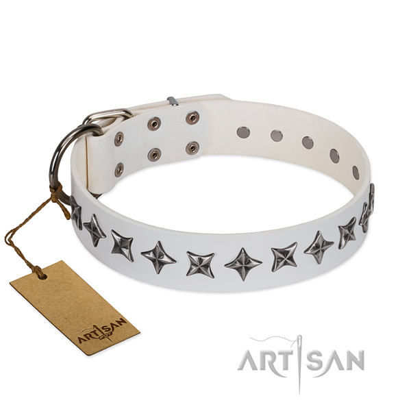 Stylish walking dog collar of fine quality natural leather with studs