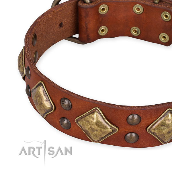 Genuine leather collar with corrosion proof hardware for your stylish four-legged friend