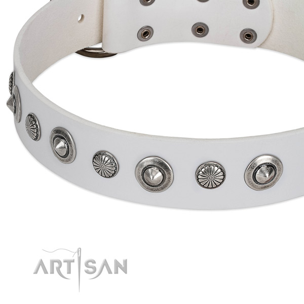 Full grain leather collar with corrosion proof traditional buckle for your attractive four-legged friend