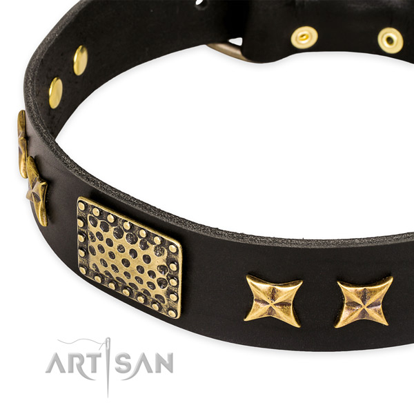 Full grain leather collar with rust resistant hardware for your attractive canine