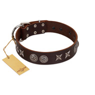 """Silver Sunset"" Designer Handmade FDT Artisan Brown Leather English Bull Terrier Collar"