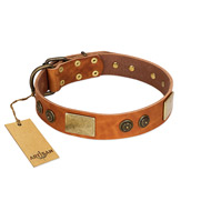 """Bronze Century"" FDT Artisan Tan Leather English Bull Terrier Collar with Plates and Brooches with Cool Ornament"