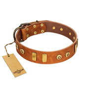 """Egyptian Script"" FDT Artisan Tan Leather English Bull Terrier Collar with Plates and Small Studs"