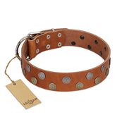"""Ancient Symbol"" Trendy FDT Artisan Tan Leather English Bull Terrier Collar with Silver- and Gold-Like Studs"