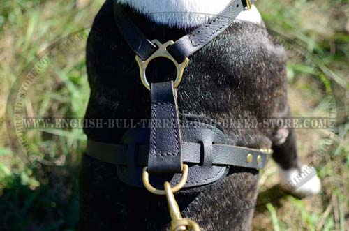 Superb Design Back Plate of Padded Leather Dog Harness