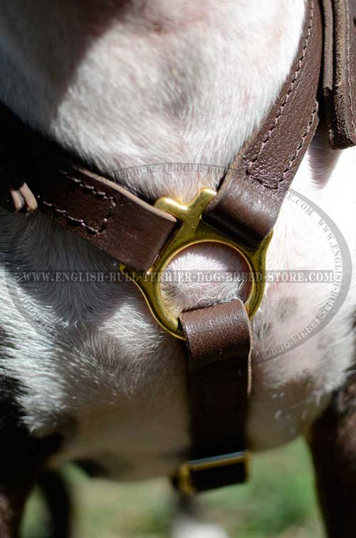 Solid Brass Ring of Walking Padded Leather Dog Harness