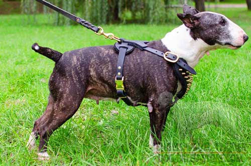 Fashion Leather Bull Terrier Harness with Wide Brass D-Ring for Lead Attachment