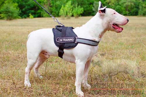 Professional Nylon Bull Terrier Harness with Velcro ID Patches