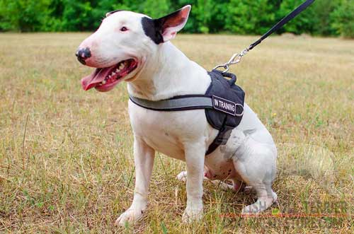 Reflective Nylon Bull Terrier Harness with Solid Nickel Plated D-Ring