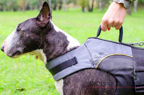 Nylon Bull Terrier Vest Fitted with Round Handle for Close Control
