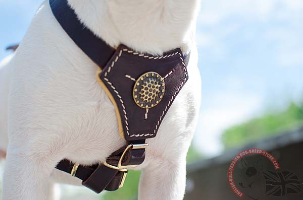 Decorated English Bullterrier puppy harness with padding