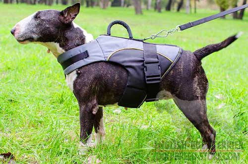 All Weather Nylon English Bull Terrier Vest with D-Ring for Lead Attachment