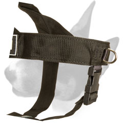 English Bull Terrier harness with D-ring