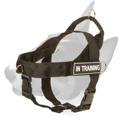 English Bull Terrier harness with id patches