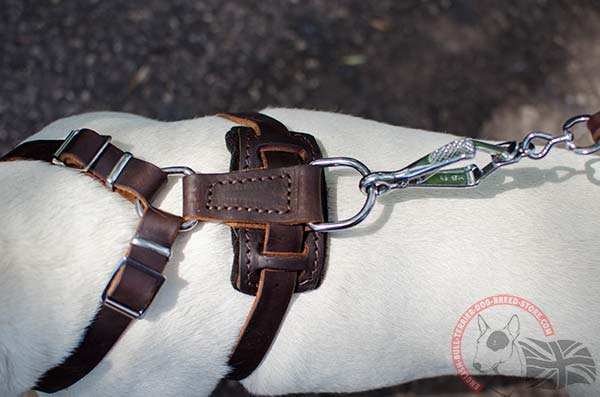 Leather English Bullterrier puppy harness with rust-proof hardware