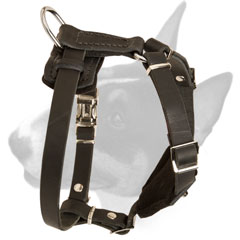 Decorated with studs leather harness for Bull Terrier puppies