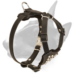 Durable Leather Bull Terrier harness for puppies