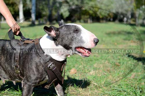Leather dog harness for training and walking
