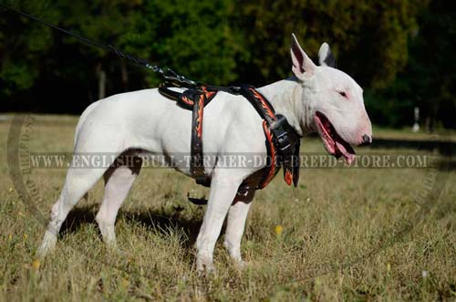Bull Terrier dog wearing hand-painted harness