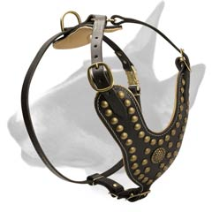 Leather harness with studs and brooch