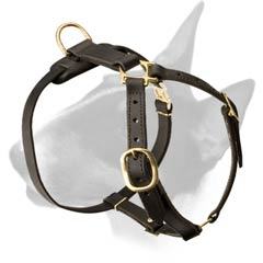 Leather harness for Bull Terrier