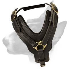 Elegant leather dog harness